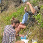 Mark Miller and DOC ranger Sarah Matthew measuring a chick on the headland overlooking Wilson's Point, Raoul Island.